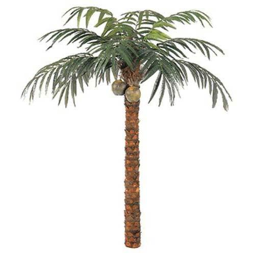 10 foot Coconut Palm Tree