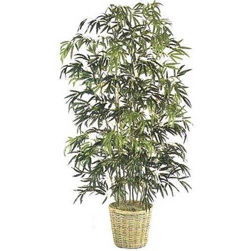 Bamboo | Silk | Tree