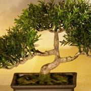 Artificial Bonsai Tree
