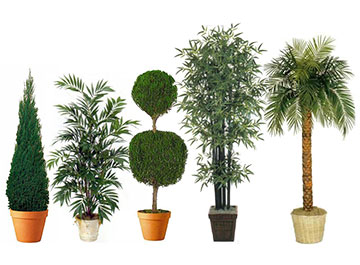 Shop Artificial Trees