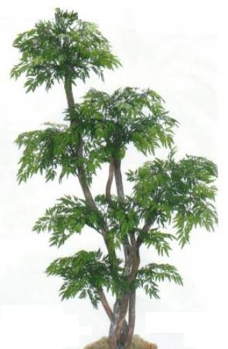 artificial house plants 78 tall chinese ming tree