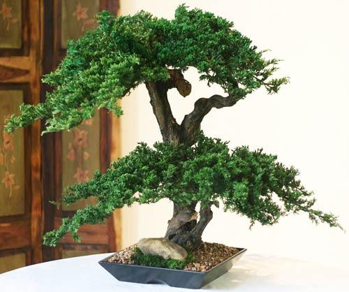 Artificial Bonsai Trees Double Double Monterey Bonsai Tree