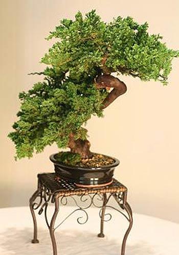 Artificial Bonsai Trees Windswept Preserved Bonsai