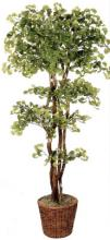 "84"" Natural Wood Ginkgo Tree :: Artificial House Plants"