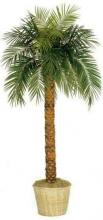 7 foot Tall Phoenix Palm Tree :: Artificial House Plants