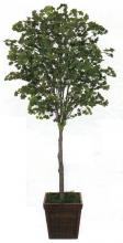 6 foot Artificial Gingko Tree :: Artificial House Plants