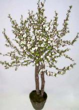 40 inch White Cherry Blossom Tree :: Artificial House Plants