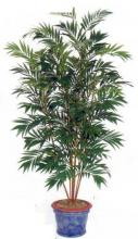 8 foot Asian Bamboo Palm ::