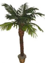 66 inch Date Palm Tree ::