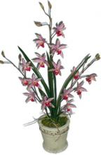 25 inch Pink Wild Vanda Orchid in Stone Pot ::