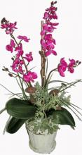 24 inch Mixed Tropical Orchid Arrangement ::