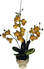 36 inch Triple Phaleonopsis Orchid in Stone Pot ::