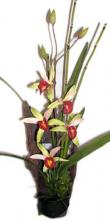 19 inch Orchid and Bamboo on Wood ::