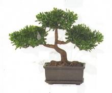 9 Inch Tea Leaf Bonsai :: Artificial Bonsai Trees