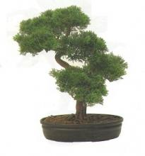 16 Inch Cedar Bonsai :: Artificial Bonsai Trees
