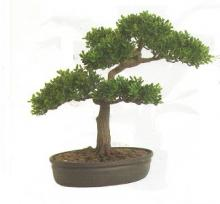 16 Inch Tea Leaf Bonsai :: Artificial Bonsai Trees