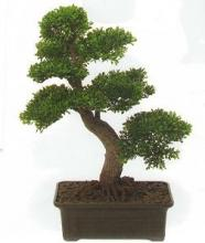 2Ft. Tea Leaf Bonsai :: Artificial Bonsai Trees