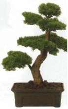 2Ft. Cedar Bonsai :: Artificial Bonsai Trees