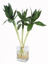3 Lotus Arrangement :: Lucky Bamboo Plant