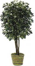 7.5 foot Ficus Artificial Tree :: Artificial House Plants