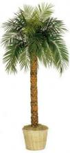 6 foot Tall Phoenix Palm Tree :: Artificial House Plants