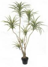 6 foot Silk Dracaena Tree :: Artificial House Plants