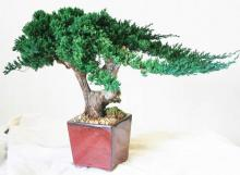Kengai Bonsai :: Artificial Bonsai Trees