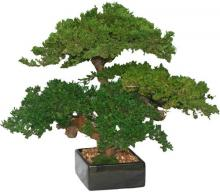 Triple Monterey Bonsai :: Artificial Bonsai Trees