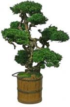 48-Inch Tall Vintage Senshi Bonsai :: Artificial Bonsai Trees