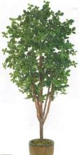 7 foot Black Olive Tree :: Artificial House Plants