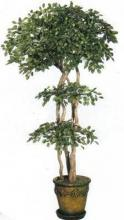 Oriental Ficus Tree :: Artificial House Plants