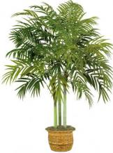 Giant 10 foot Kentia Palm :: Artificial House Plants