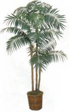 Sugar Cane Palm Tree :: Artificial House Plants