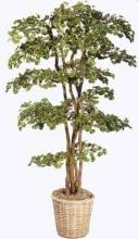 Chinese Ginkgo Tree :: Artificial House Plants