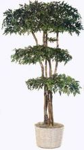Ming Aralia Tree :: Artificial House Plants