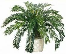 3 foot Life-like Sago Palm :: Artificial House Plants