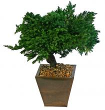 Preserved Juniper Bonsai Tree - Windswept Style :: Artificial Bonsai Trees