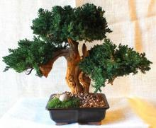 Triple Sandblasted Bonsai Tree  :: Artificial Bonsai Trees