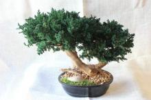 Double Bonsai Sandblasted :: Artificial Bonsai Trees