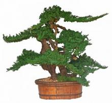 "36"" Vintage Bonsai :: Artificial Bonsai Trees"