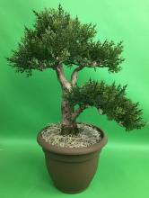 15 inch Artificial Cedar Bonsai :: Artificial Bonsai Trees