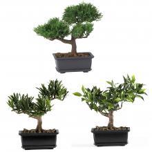 "8.5"" Bonsai Silk Plant Collection (Set Of 3) :: Artificial Bonsai Trees"