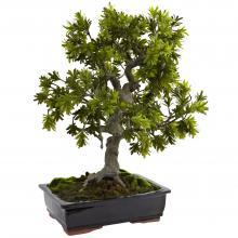 Giant Podocarpus W/Mossed Bonsai Planter :: Artificial Bonsai Trees