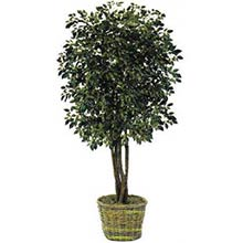 7 foot Ficus Artificial Tree