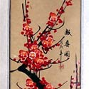 Cherry blossom scroll paintings